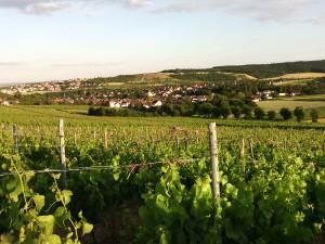 Burg Layen die Heimat vom Weingut Schlossmühle Dr. Höfer