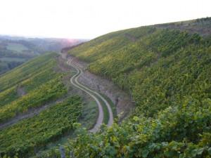 Weingut Höfer Weinberge Trollbachtal