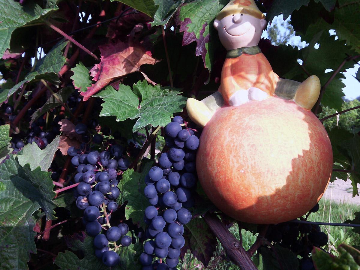 Weingut Dr.Höfer Weinlese Wein Troll