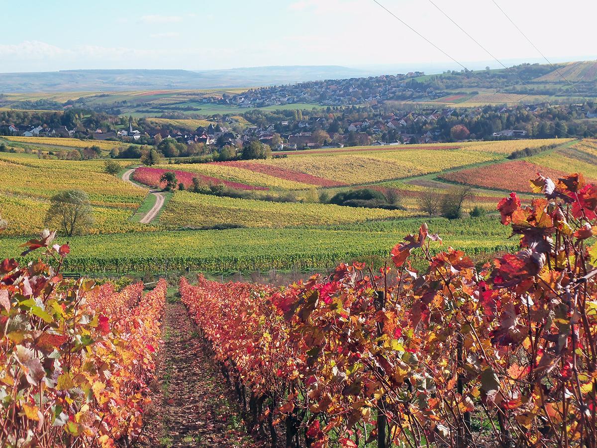 Weingut Schlossmühle Burg-Layen-Weinberge Goldener Herbst