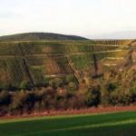Weingut Dr.Hoefer Spitzenweinbergslage Dorsheimer Goldloch