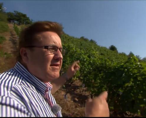 Agrotourismus Weingut Höfer Urlaub